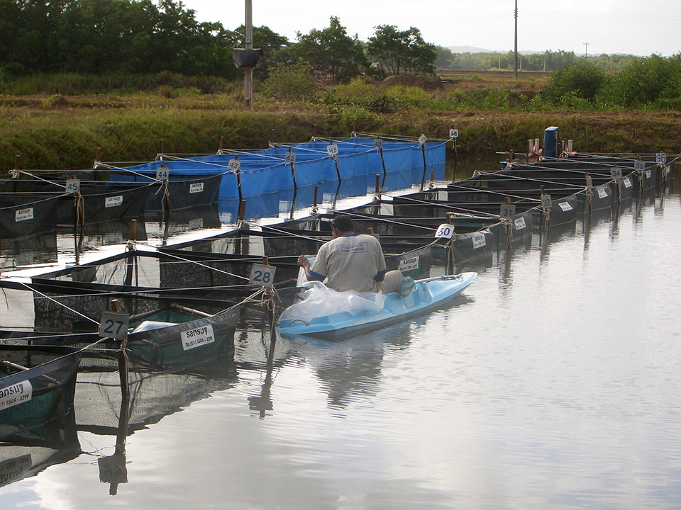 Article image for Field performance of imported SPF shrimp in Brazil