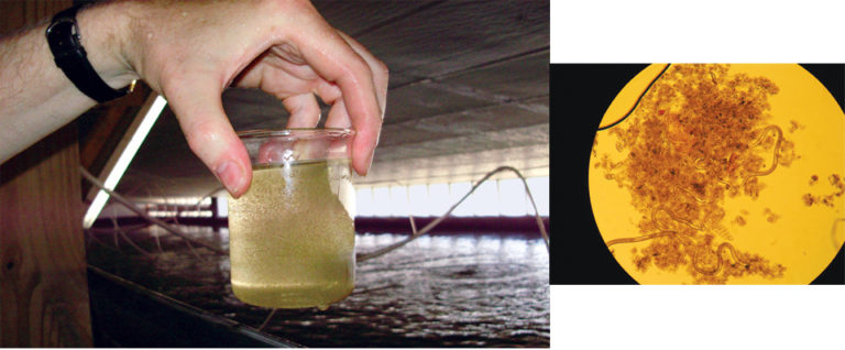 Article image for Carbon-nitrogen balance impacts nitrogen removal