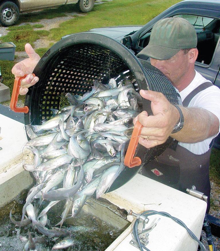 Article image for Misuses of sodium bicarbonate in pond aquaculture