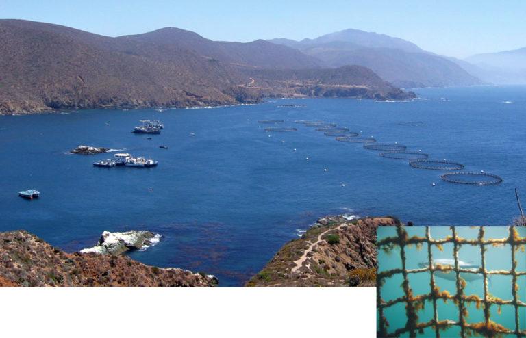 Article image for Tuna ranching in Baja California, Mexico