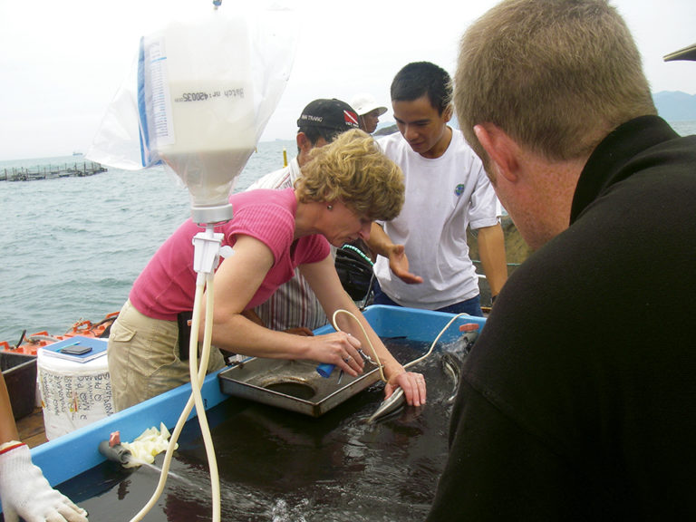 Article image for Fish vaccination: Success with salmon expanding