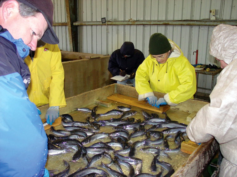 Article image for Modular advantages for catfish production