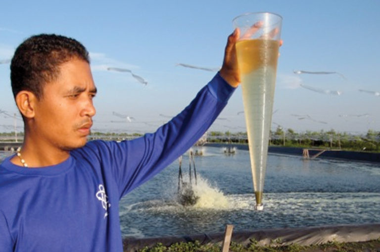 Article image for Partial harvest-biofloc system promising for Pacific white shrimp