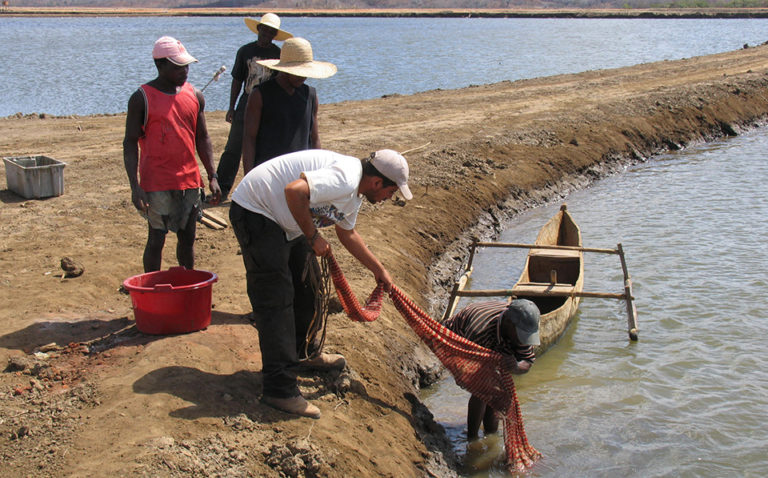Article image for Relevance of sampling protocols to determine shrimp, fish health