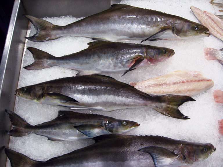 Article image for Cobia culture: Global production, markets, challenges