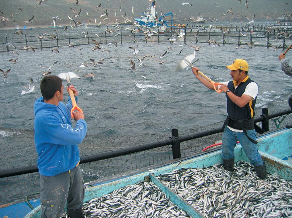 Tuna aquaculture