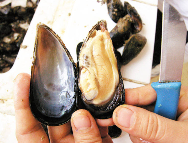 Article image for Government promotes shellfish culture in Turkey