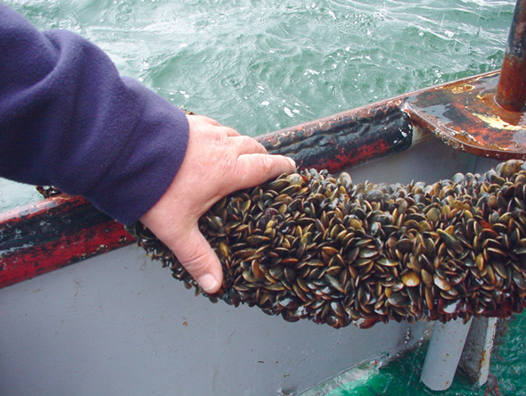 Article image for Shellfish innovations in the Netherlands: Mussel seed collectors