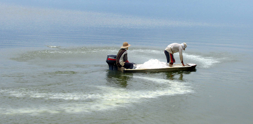 Article image for Calculating chemical treatments for aquaculture production