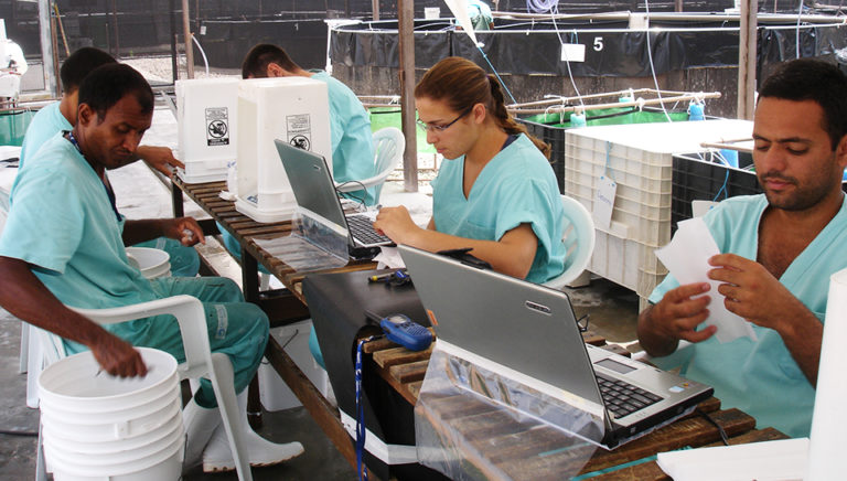 Article image for Shrimp hybrids outperform parents in Brazil studies