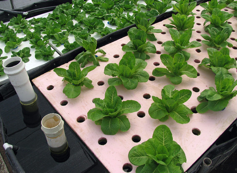 Article image for Interest rises in backyard aquaculture