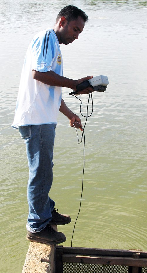 Article image for Dissolved oxygen concentrations in pond aquaculture