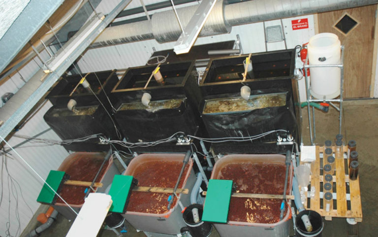 Article image for Hydrogen peroxide: Disinfectant for recirculating aquaculture systems