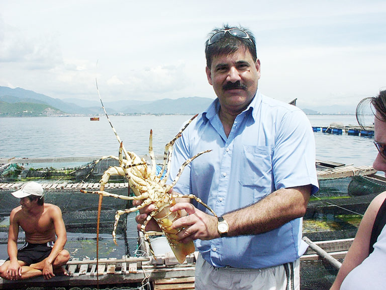 Article image for Spiny lobster aquaculture