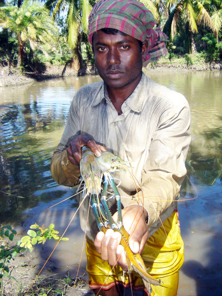 Article image for Integrated prawn-fish-rice culture aids Bangladesh farmers, related workers, economy