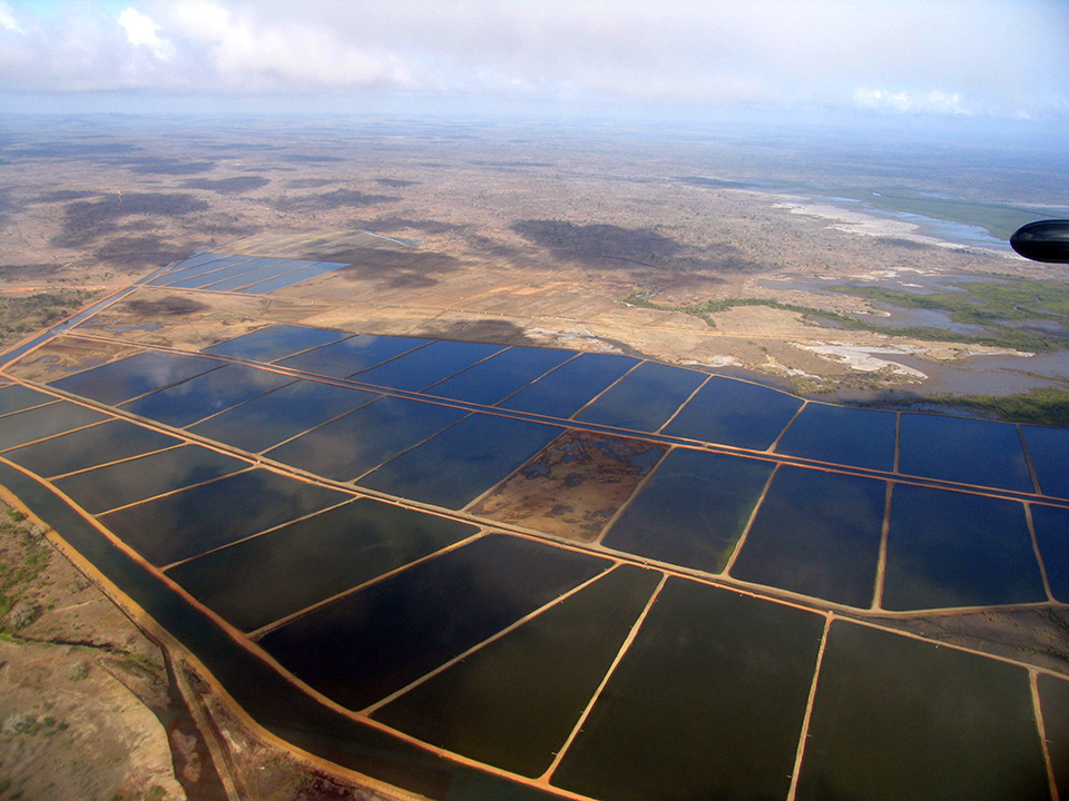Article image for Aquaculture ponds hold carbon