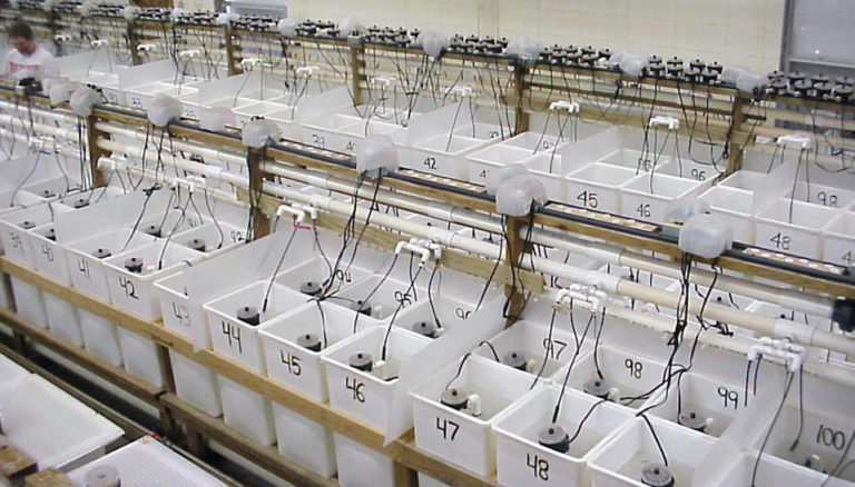 Article image for Methionine requirements estimated for white shrimp