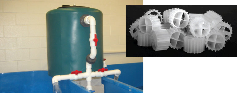 Article image for Low-space bioreactors remove ammonia in recirculating systems