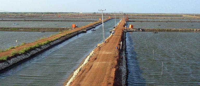 Article image for Examining water temperature in aquaculture