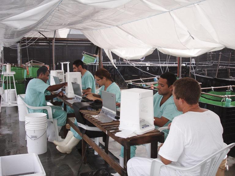 Article image for SPF shrimp breeding in Brazil