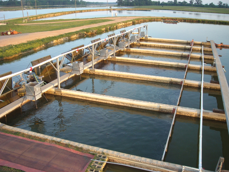 Article image for In-pond raceway system demonstrates economic benefits for catfish production