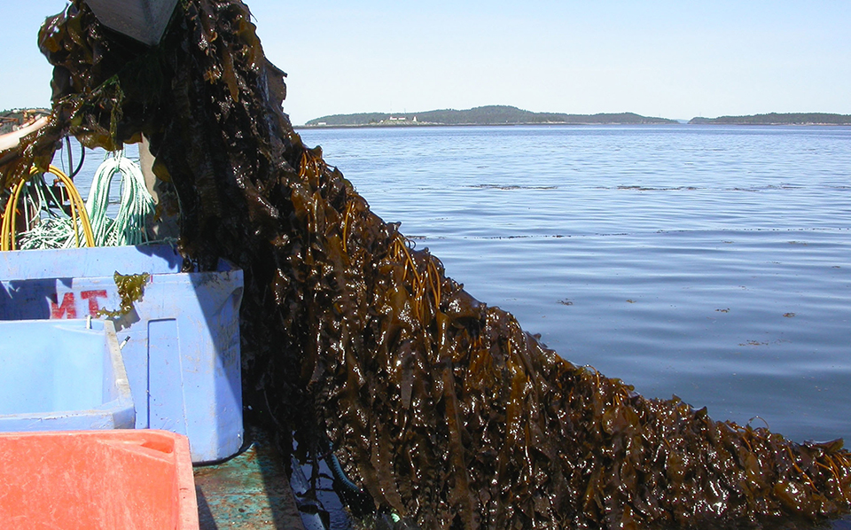 Article image for Integrated multi-trophic aquaculture, part 2