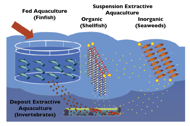 Article image for Integrated multi-trophic aquaculture, part 1