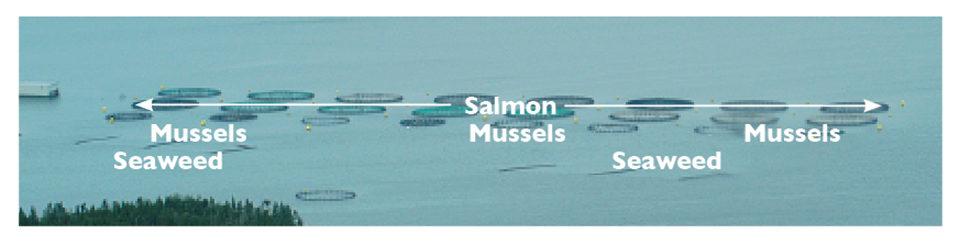 Integrated multi-trophic aquaculture