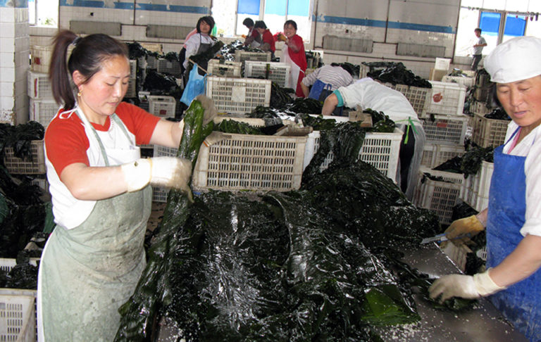 Article image for Turning to the sea: Can seaweed help us raise more food more efficiently?