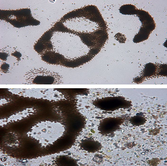 Article image for Clay flocculation counters microcystin pollution in China study