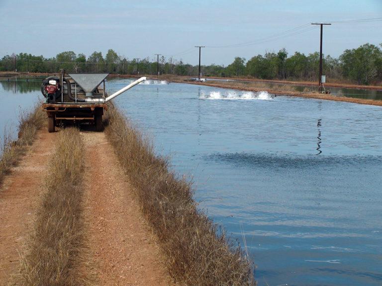 Article image for Phosphates, pH management control algal blooms in barramundi ponds