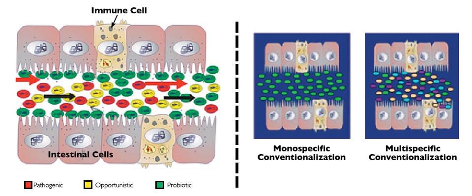 Article image for Domestication of gut microbiota can improve shrimp aquaculture