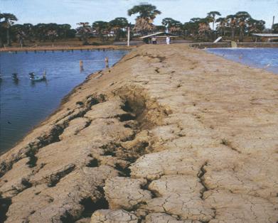 Article image for Erosion, sedimentation in earthen aquaculture ponds