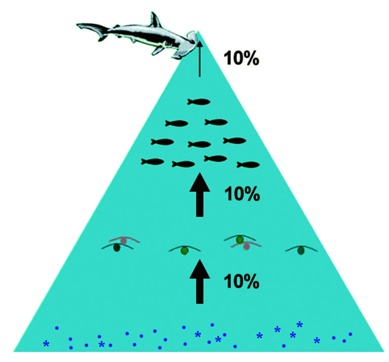 Article image for Lifecycle analysis model quantifies ecological footprint of salmon feed