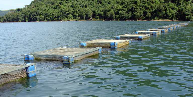Article image for Load models support sustainable aquaculture planning for Brazil's reservoirs