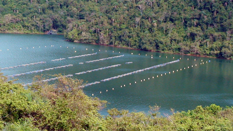 Featured image for Animal Health and Welfare in Aquaculture