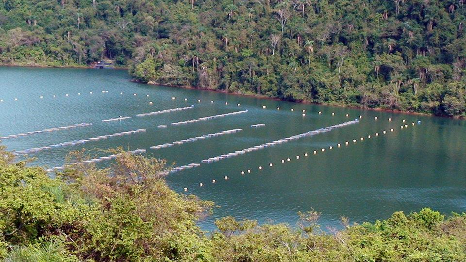 animal health and welfare aquaculture