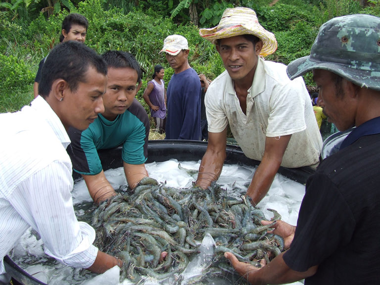 Article image for Blue alternative: High Health introduces SPF blue shrimp to Thailand