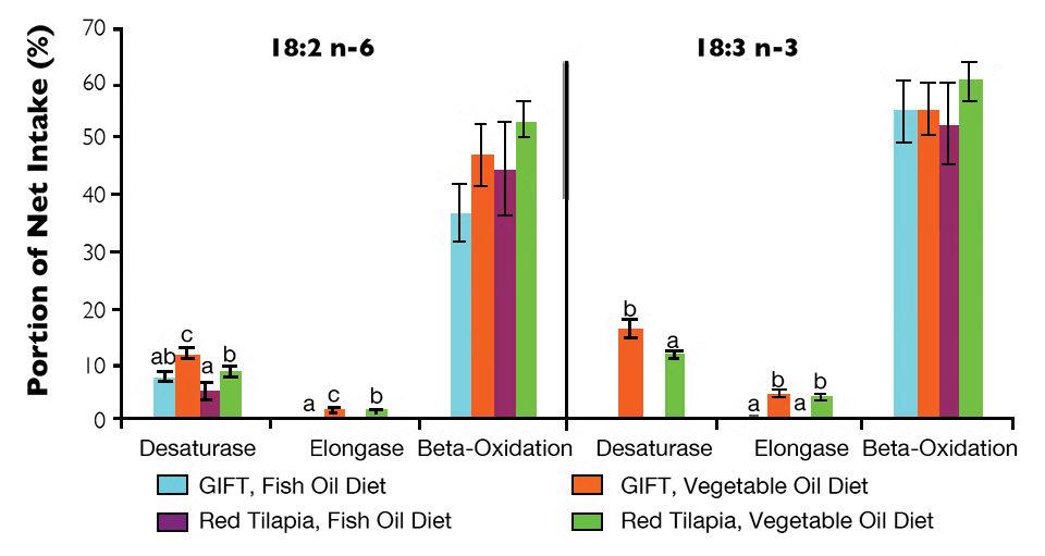fish oil diet