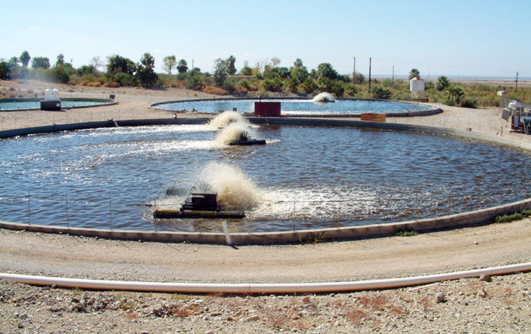 Article image for Tilapia production using biofloc technology