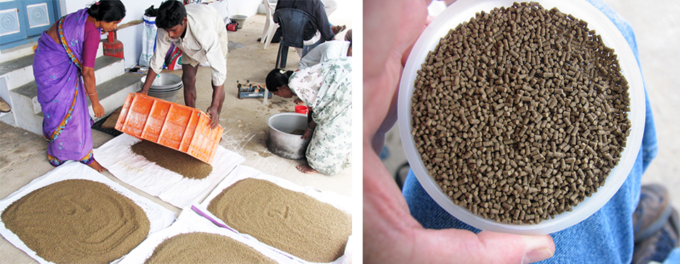 Article image for A look at India's fish feed industry