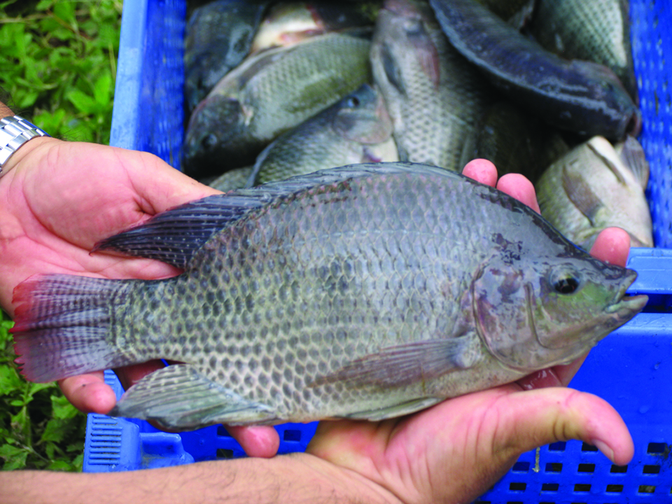 Article image for American fisheries society calls for immediate-release fish sedatives