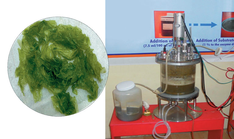 Article image for Single-cell detritus: fermented, bio-enriched feed for marine larvae