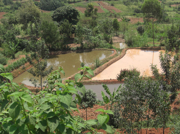 Article image for Uncharted waters: Kenya takes dramatic leap in aquaculture