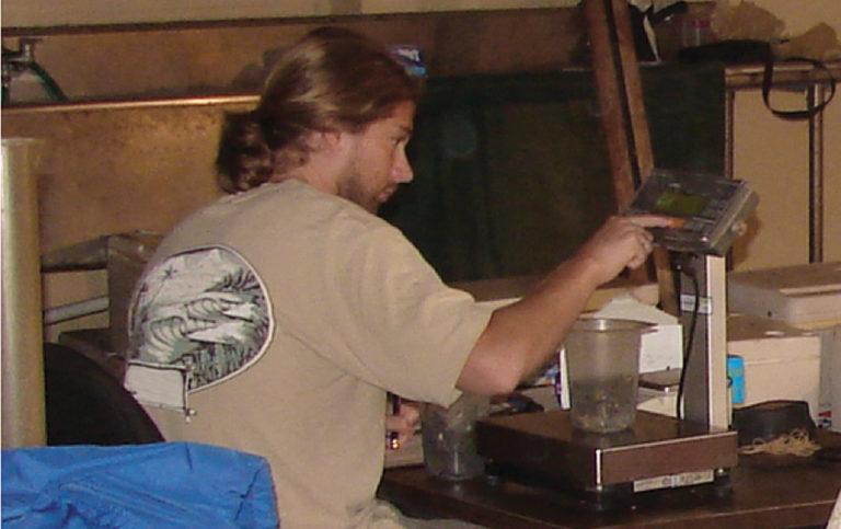 Article image for Shrimp sampling method improves stocking process