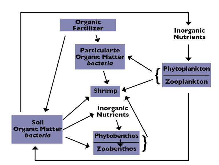 Article image for Organic matter for pond fertilizer