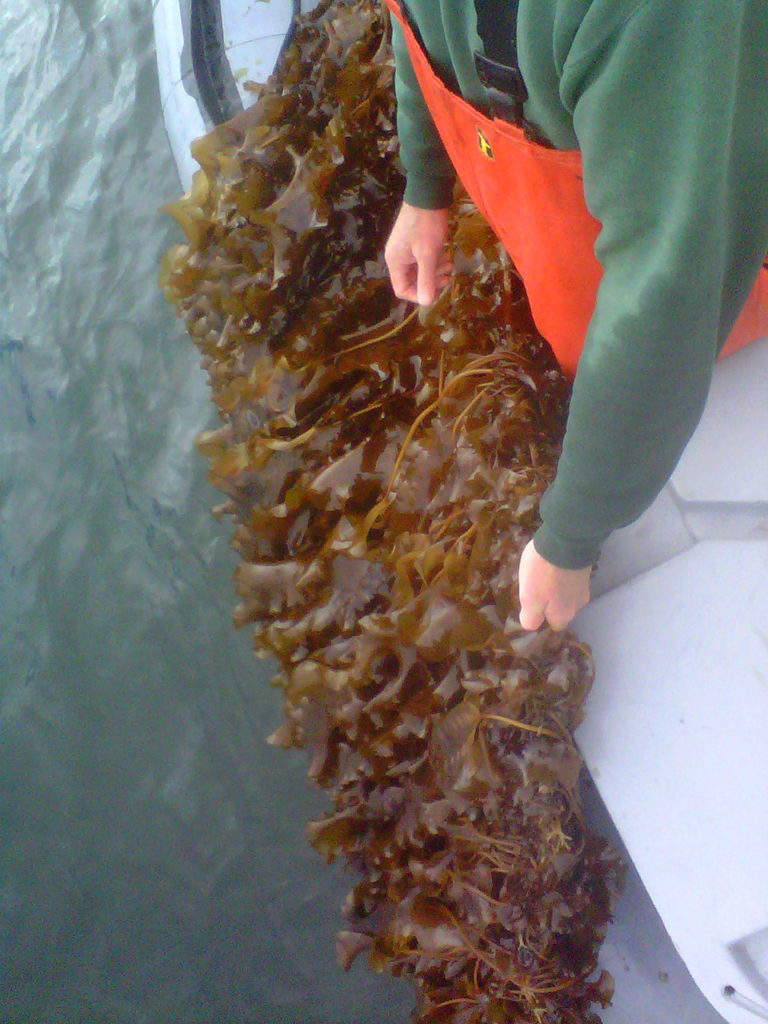Article image for Seaweed farming offers avenue toward greater food security