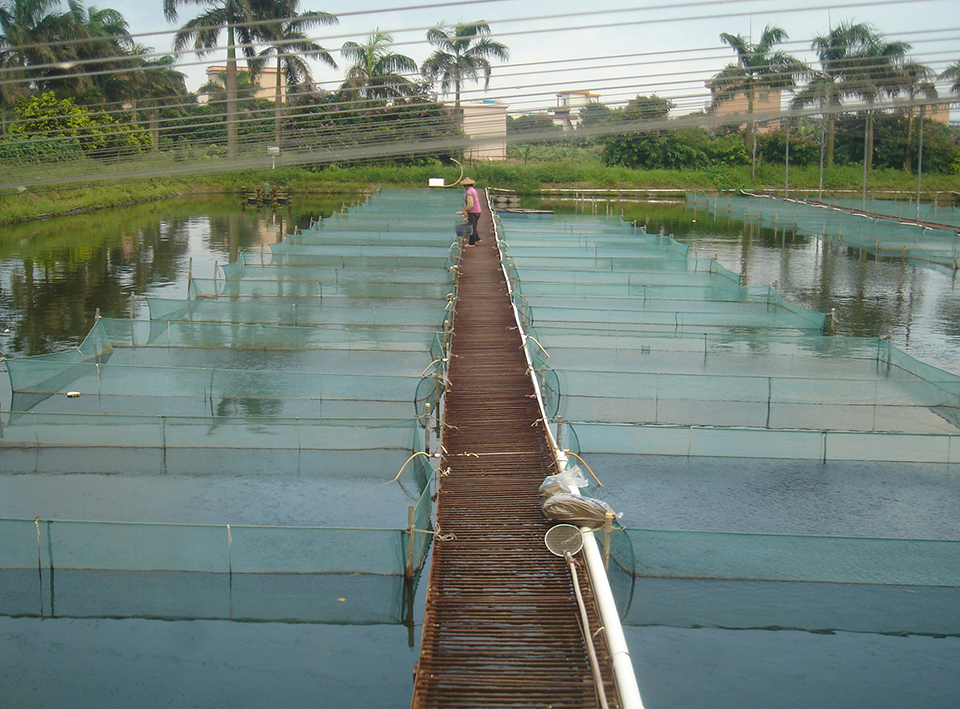 Article image for China's tilapia germplasm: Chance and challenge