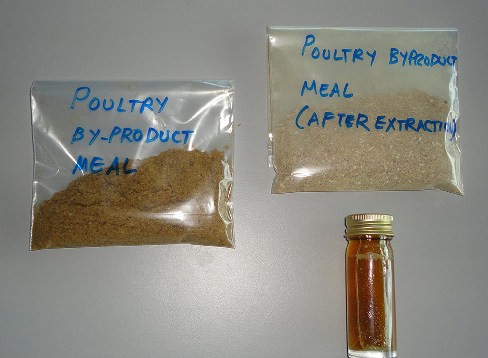 poultry byproduct