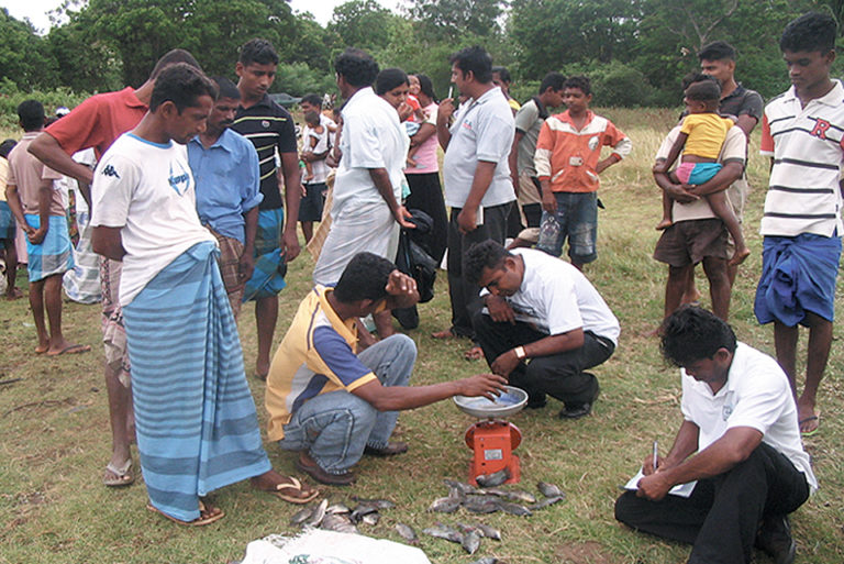 Article image for GIFT tilapia raise culture efficiency in Sri Lanka